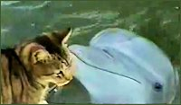 CatAndDolphin