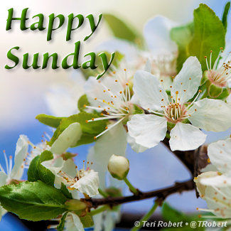 HappySundayBlossoms